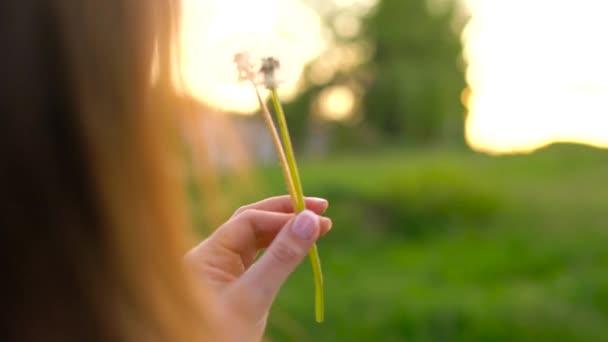 Krása žena fouká Pampeliška proti západu slunce, zadní pohled