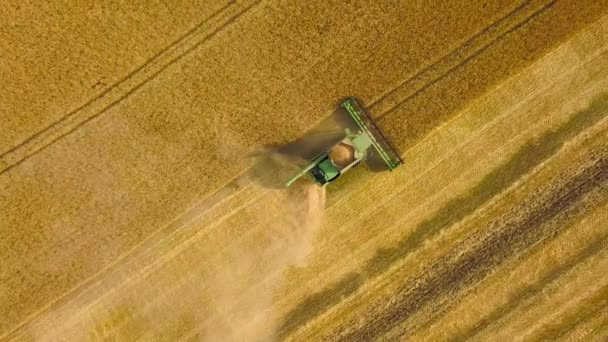 Top View Combine Harvester Gathers The Wheat At Sunset Harvesting Grain Field Crop Season
