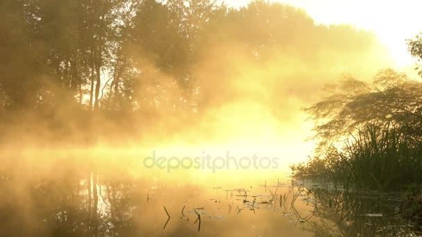 Nebel über dem ruhigen Fluss im Morgengrauen