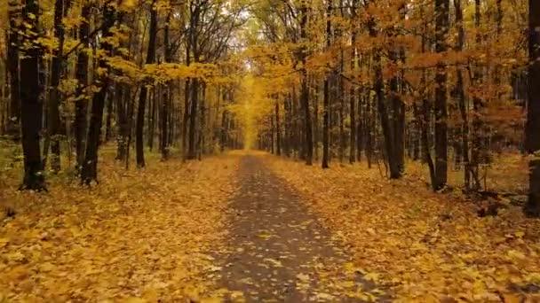 Az őszi erdő festői ösvényen repülés
