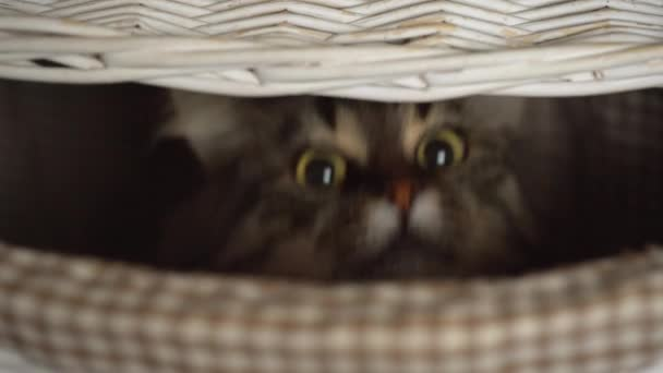 Cirmos cica less ki egy fa kosár