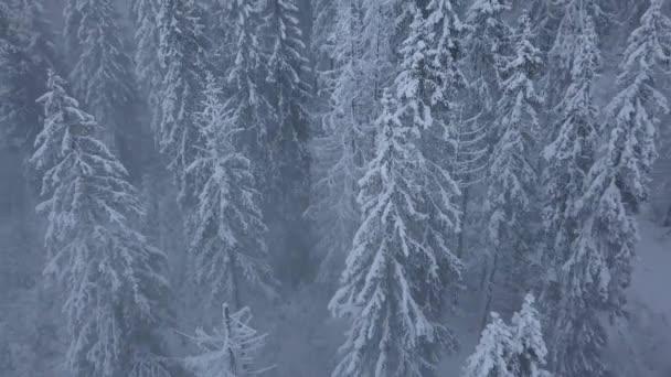 Let nad sněhová bouře v zasněžené horské jehličnaté lesy, nepříjemné nepřátelské zimní počasí