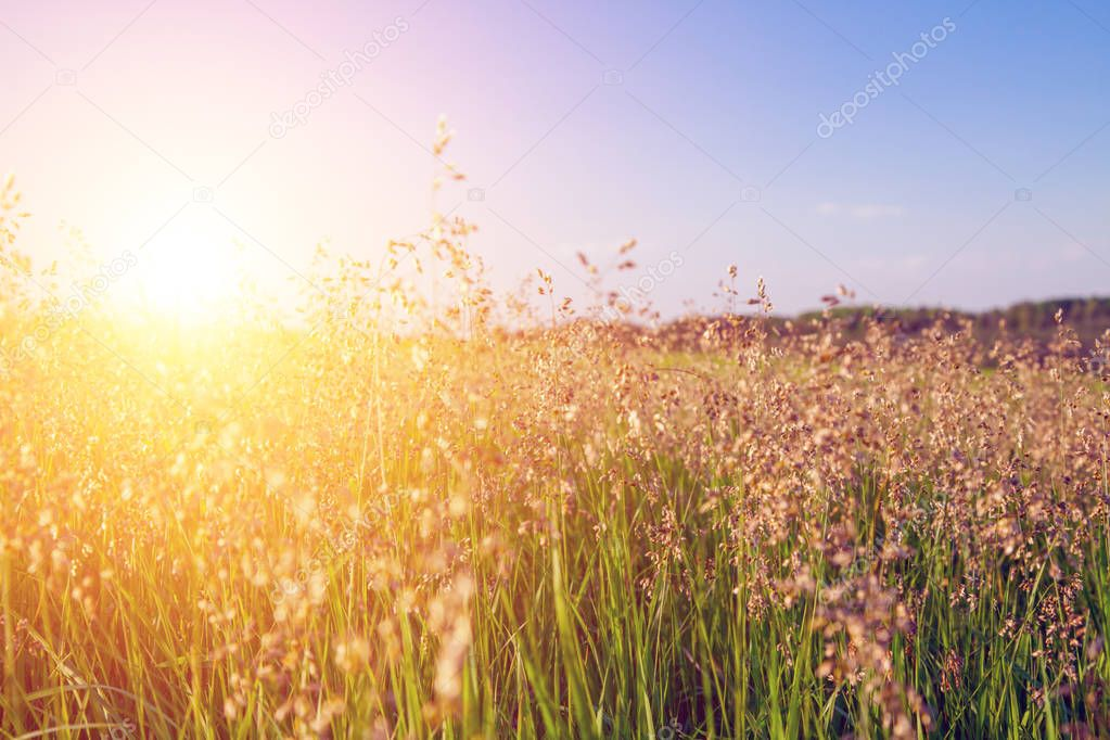 sunset and grass and flowers