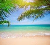 Palmami a tropickou pláž