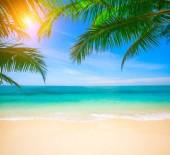 Úžasný snímek tropických pláží s kokosovými palmami