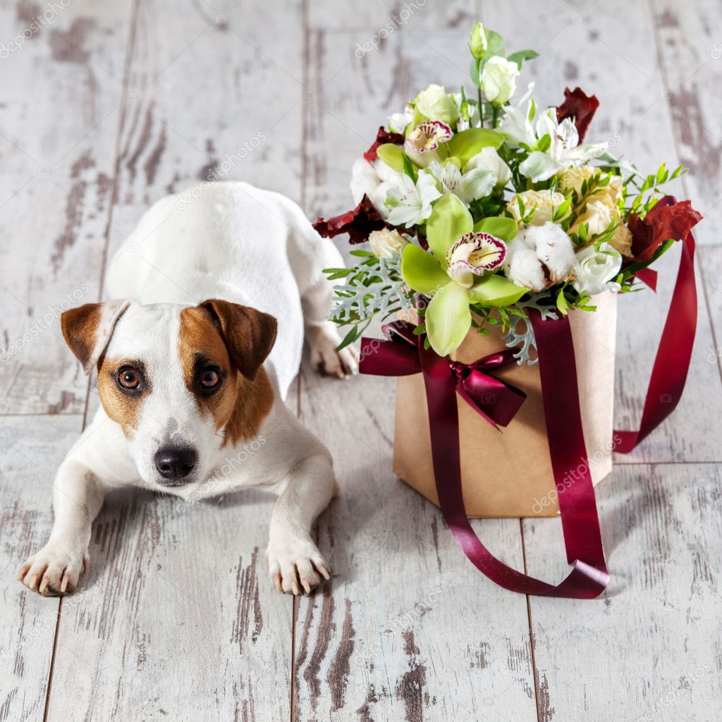 Dog With Bouquet Flowers On Floor Stock Photo Tatyanagl 127231204