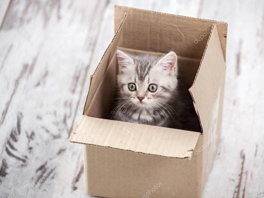 Любопытный Серый котенок в картонной коробке — Стоковое ...