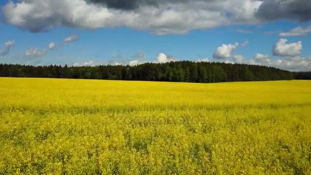 4 k. letu a startu nad kvetoucí žlutou řepkové pole na slunečný den v jaro, letecký panoramatický pohled.