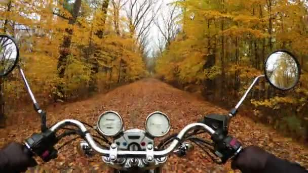 4K Compilation Video. Fantastic motorcycle ride on the road in color forest, wide point of view of rider. Classic cruiser/chopper forever!