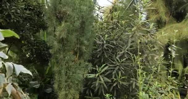 Trópusi növények és a botanikus kert fa. Botanikus üvegházhatást okozó. Belső üvegház. Trópusi háttér.