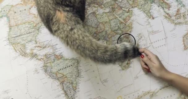 Turistické žena s kočkou plánování cestování dobrodružství při pohledu na mapu světa. pohled shora