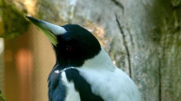 videa z velkého černého ptáka