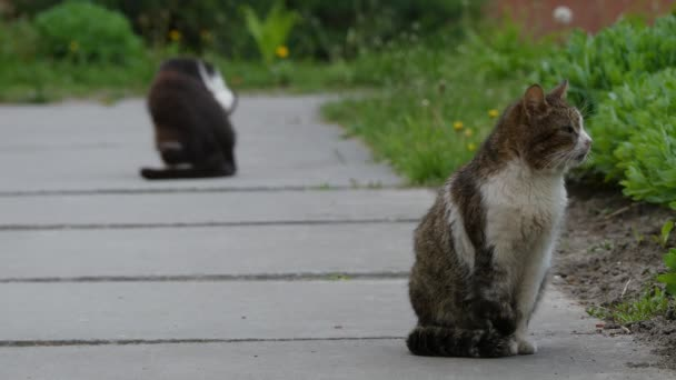 Two cats walking on footpath in summer city park.