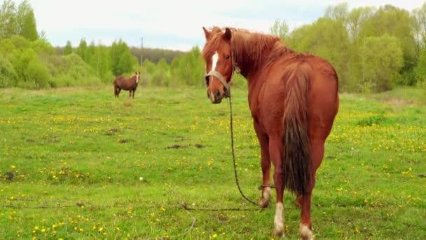 Kůň se pase na letní pastviny s travinami poblíž vesnice.