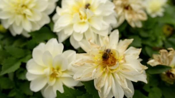 Posaď se a sbírají nektar z bílý květ