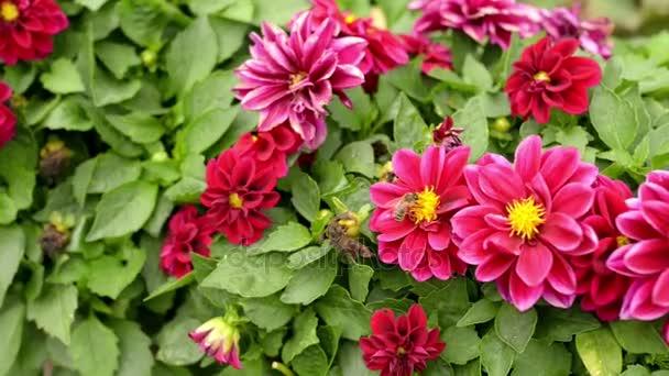 Posaď se a sbírají nektar z červený květ