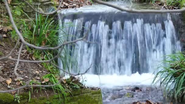 Malý vodopád na horské řece v hustém lese.