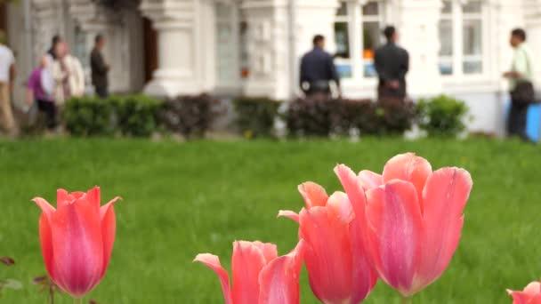 Bollen Bloeiend Voorjaar : Tulpen tulipa formulier geslacht van lente bloeiende meerjarige