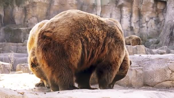 Medvěd hnědý (Ursus arctos) je medvěd, který se nachází přes velkou část Severní Eurasie a Severní Ameriky