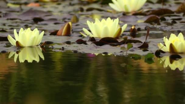 Leknín je rod otužilá a nabídky vodních rostlin v rodině Leknínovité. Rod má kosmopolitně. Rostliny rodu jsou běžně známé jako lekníny.