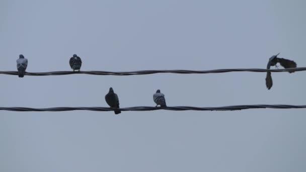Skupina holubů na elektrické dráty proti obloze.