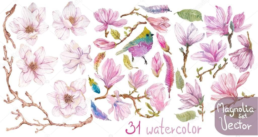 Watercolor branches of magnolia, beautiful flowers over white