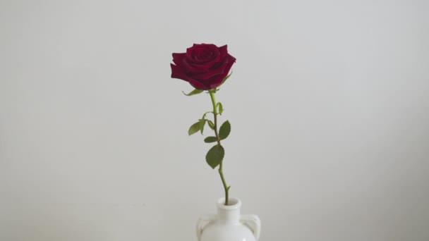 Vörös rózsa egy vázában a fal mellett