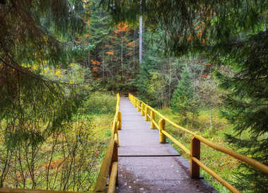 Autumn landscape - wooden bridge in the autumn park