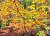 Fogli dellalbero di autunno con la caduta gialla