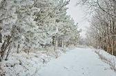 Tag im verschneiten Winterwald