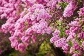 Fotografie Krásné čerstvé lila fialové květy. Zblízka fialový květ