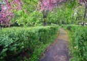 Fotografia Parco con alberi di mele di vicolo di fioritura rosso