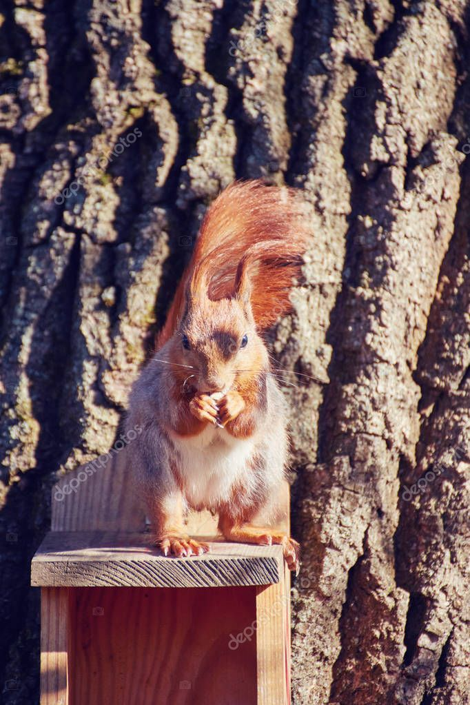 squirrel sits on a tree in the manger