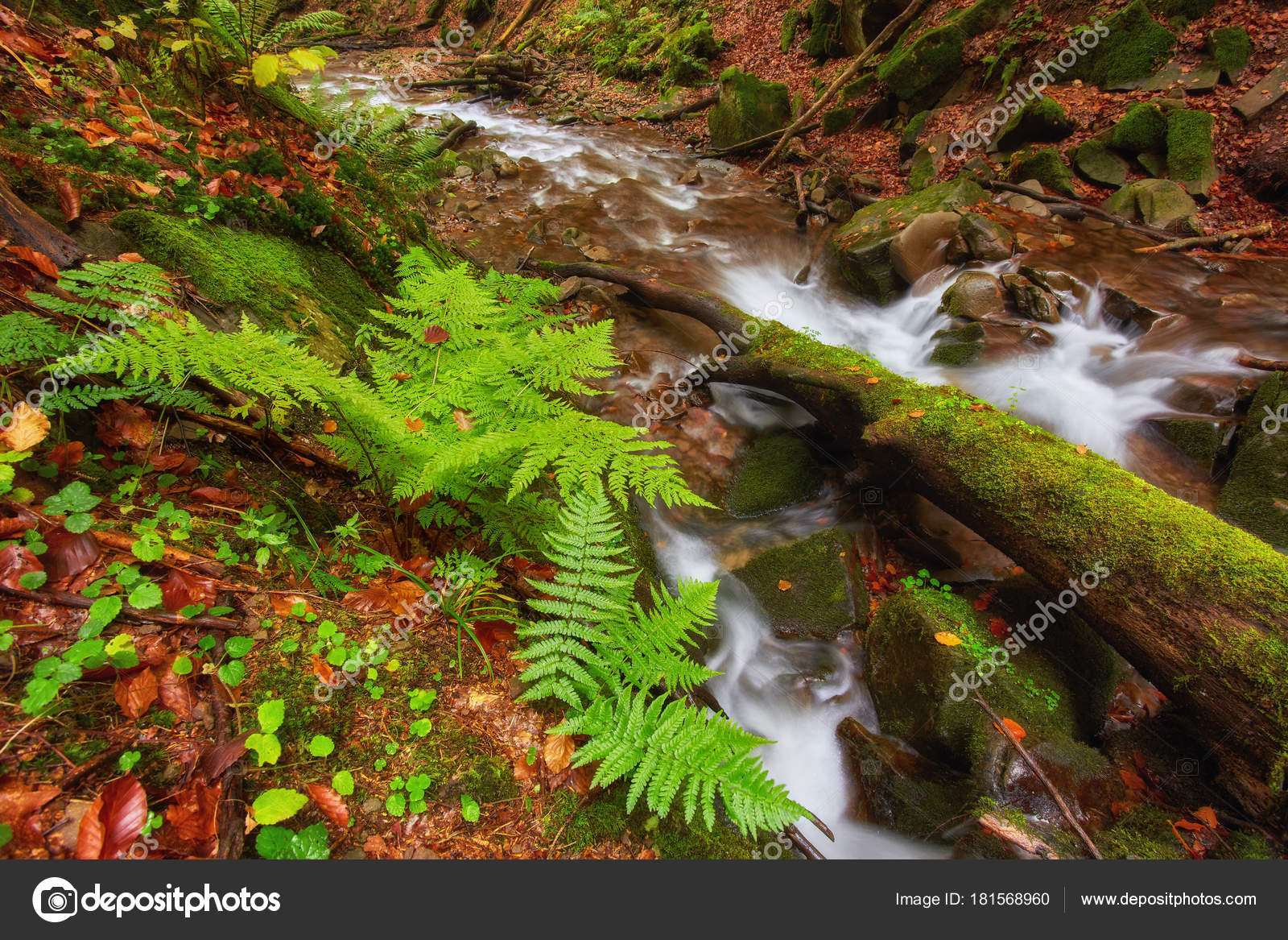 Autumn River Colorful Forest Mountain River Water Leaves Trees Low ...