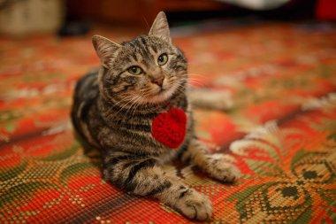 """Картина, постер, плакат, фотообои """"пушистый персидский кот ."""", артикул 185054386"""