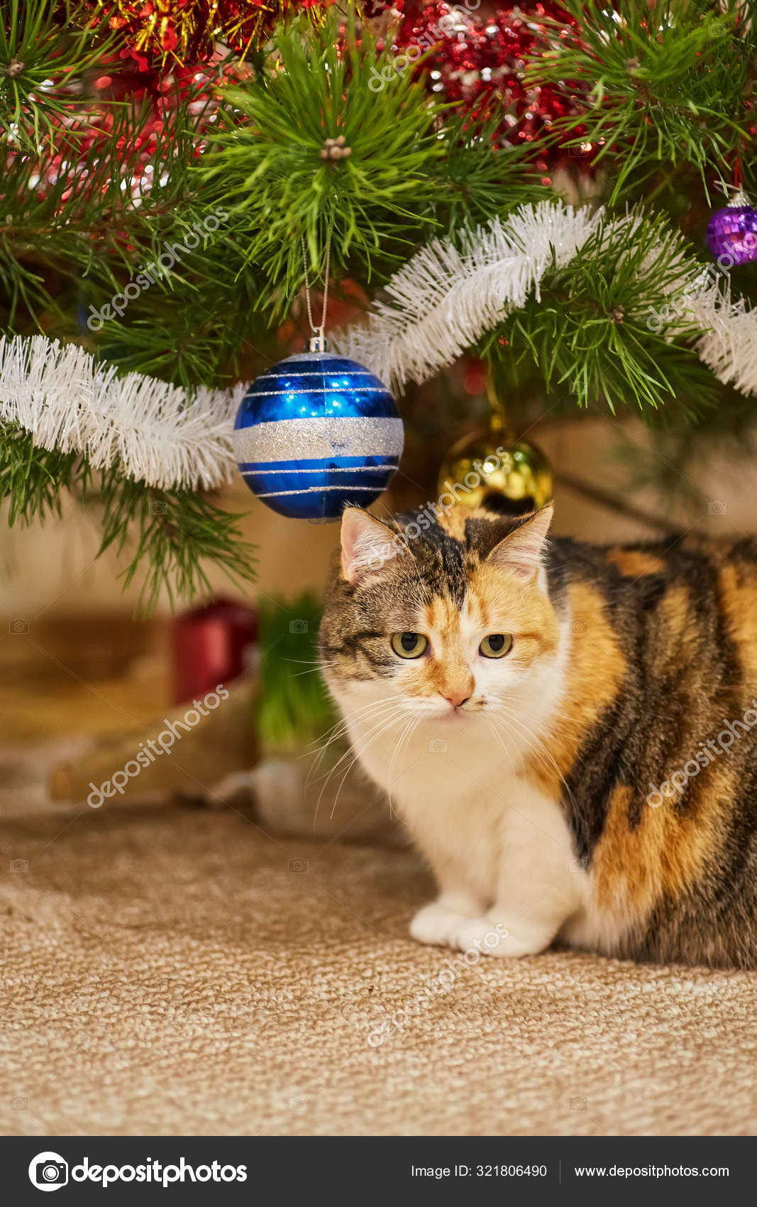 Симпатичная кошка сидит на дереве рядом с рождественскими ...