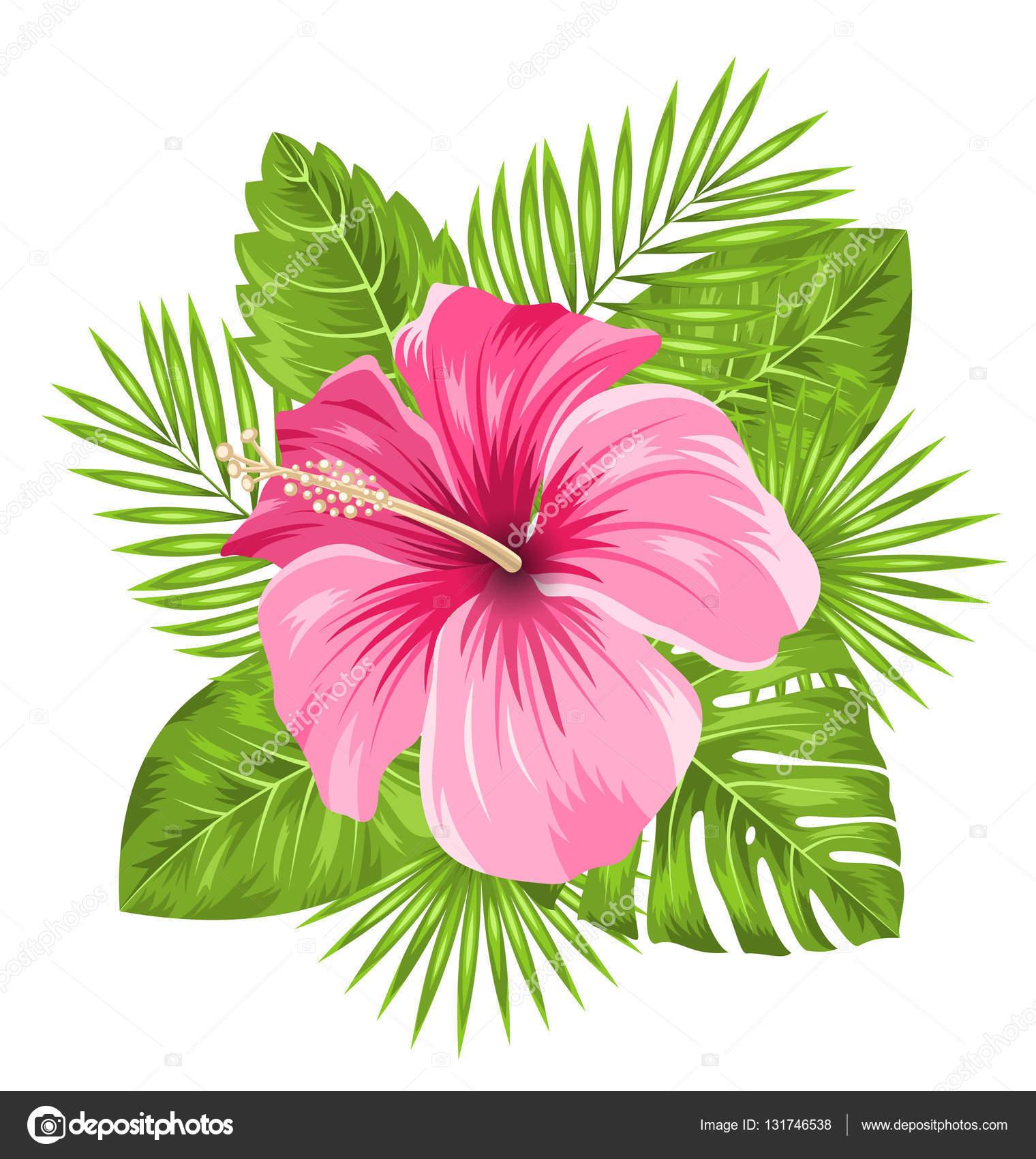 Fleur de fleurs d hibiscus rose belle et feuilles - Fleur d hibiscus dessin ...
