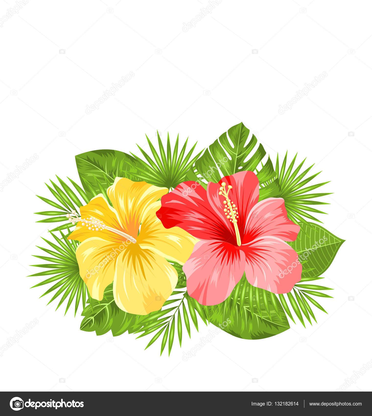 Fleur de fleurs belle hibiscus color s et feuilles - Dessin d hibiscus ...