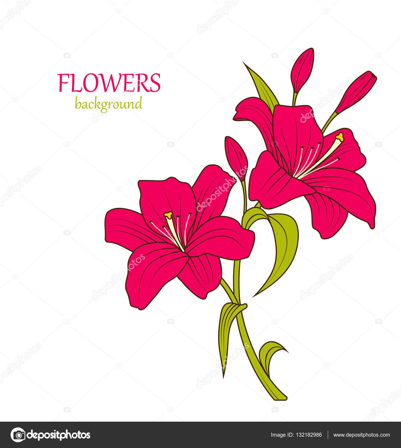 Dibujo Lineal Color De Flores Hermoso Lirio Aislado Fotos De Stock