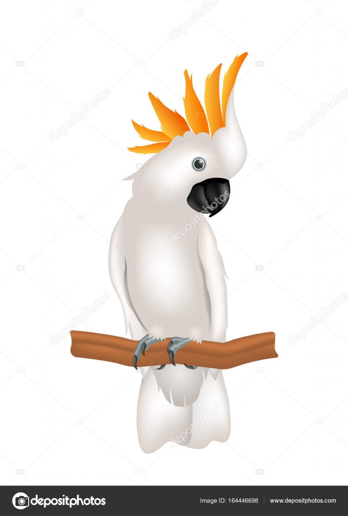 Yellow Crested Cockatoo Stock Vectors Royalty Free Yellow Crested Cockatoo Illustrations Depositphotos