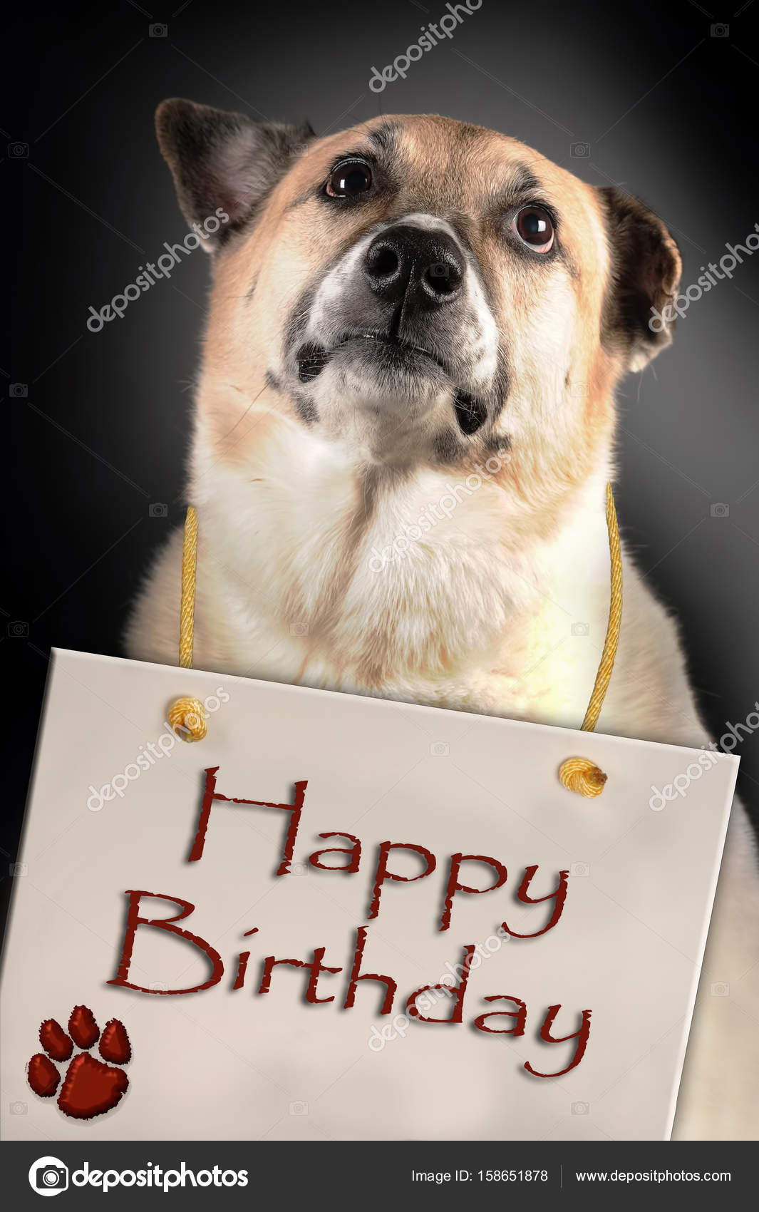 Dog With Happy Birthday Sign