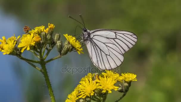 White butterfly on a yellow flower