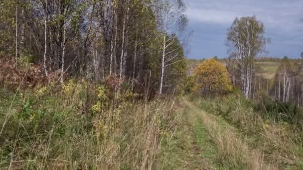 Průjezd podél podzimní lesní cesta