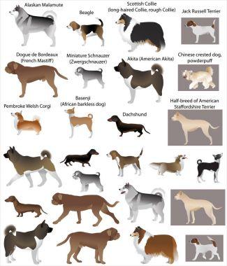 Dog show colour