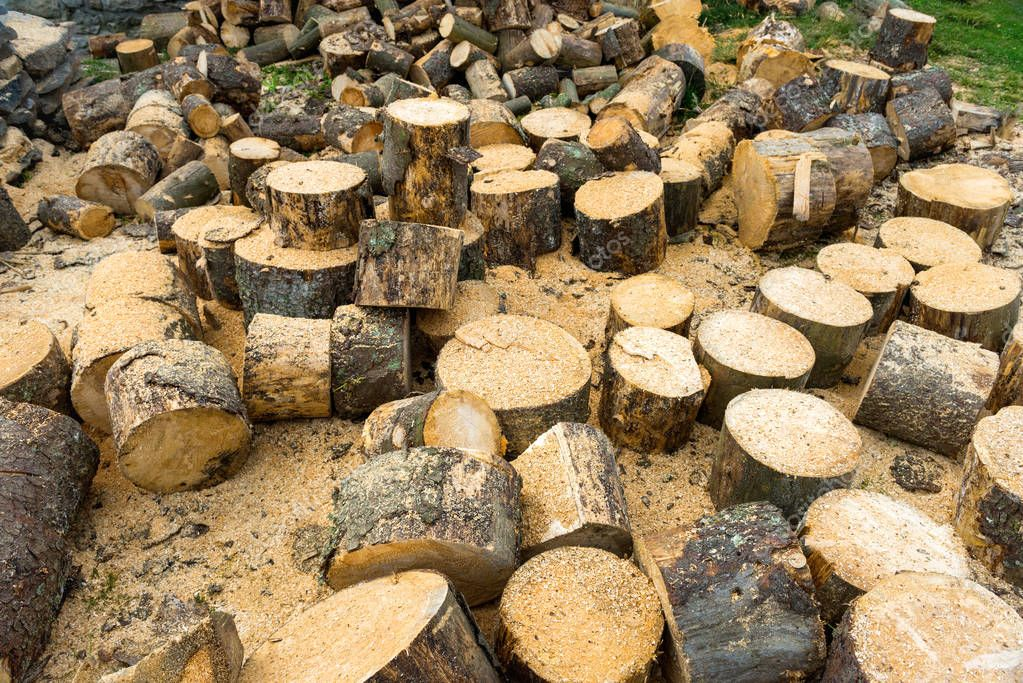 Wooden logs of oak tree