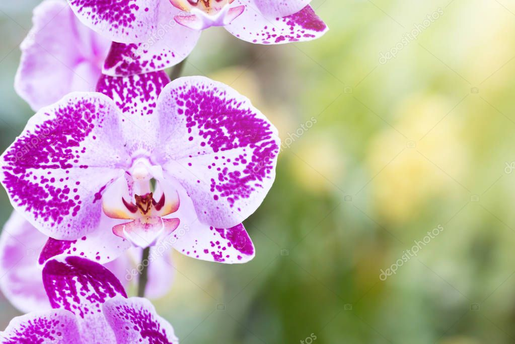 Purple orchids in a tropical forest