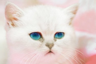 Little cute sad white cat