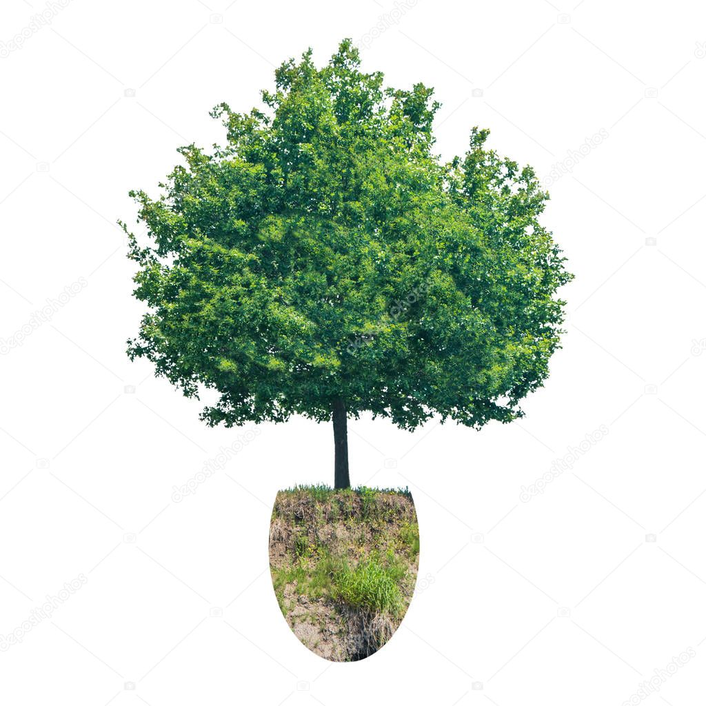 Green tree with piece of ground