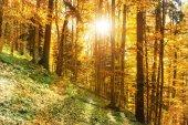 ráno v podzimním lese