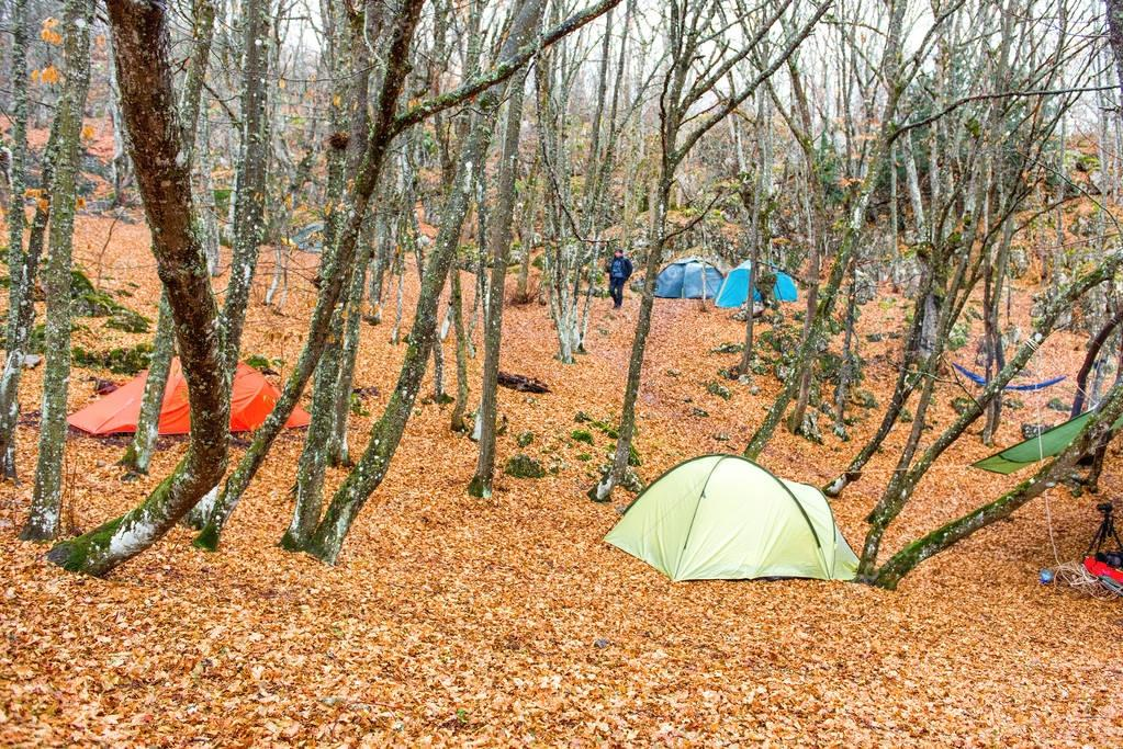 Camp with color tents in autumn forest with fallen leaves